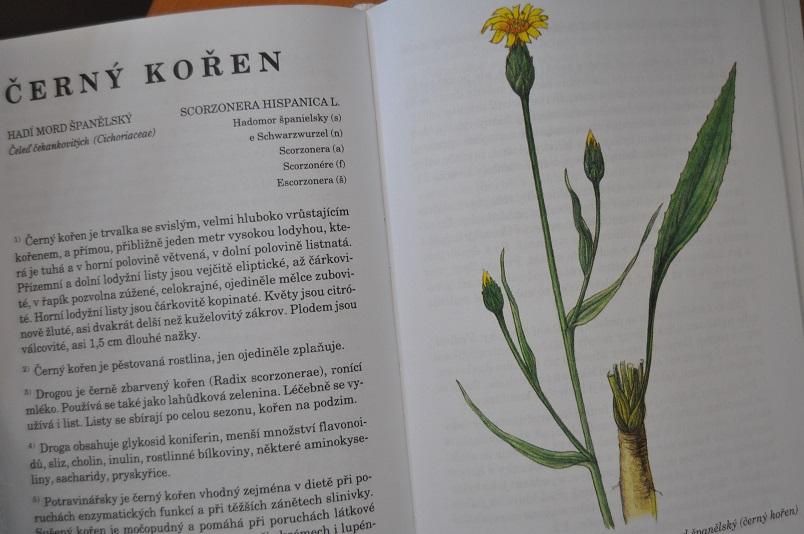 Černý kořen v herbáři Janča a Zentrich