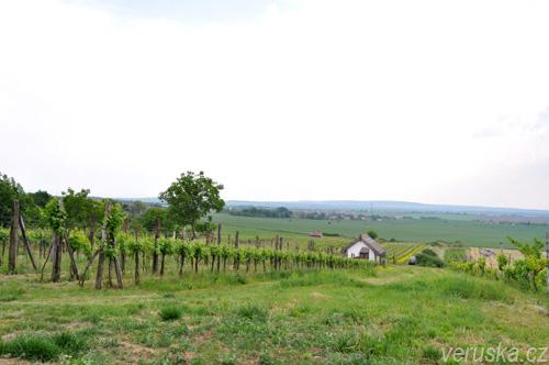 Vinohrad Rúbaň-Strekov